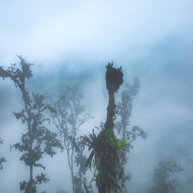"""Tropical Trees in Dense Fog"" stock image"