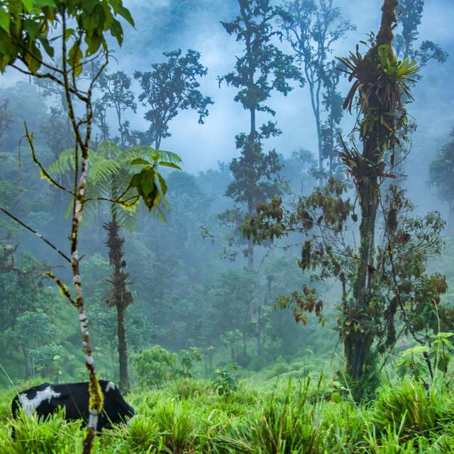 """""""Tropical Rainforest Landscape"""" stock image"""