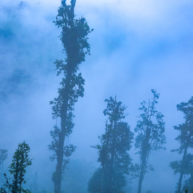 """""""Cloud Forest In the Andes Mountains"""" stock image"""