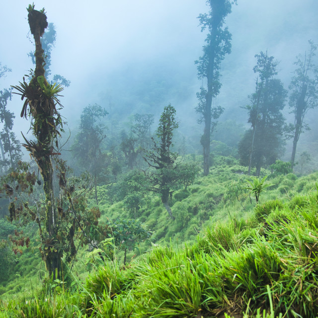 """""""Lush Green Tropical Trees in Fog"""" stock image"""