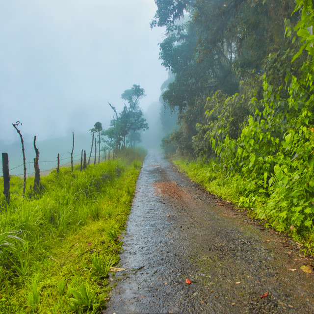 """""""Road in Tropical Forest"""" stock image"""