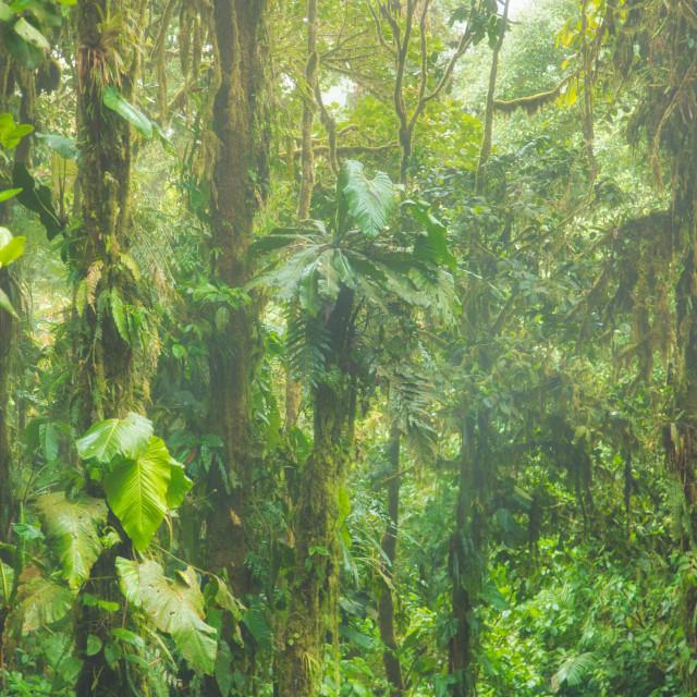 """Jungle Fog"" stock image"