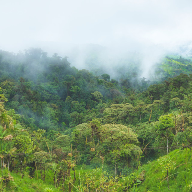 """""""Mountain Valley Rain Forest"""" stock image"""