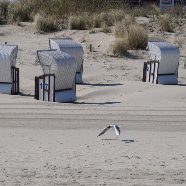 """""""A lonely seagulls with beach chairs"""" stock image"""