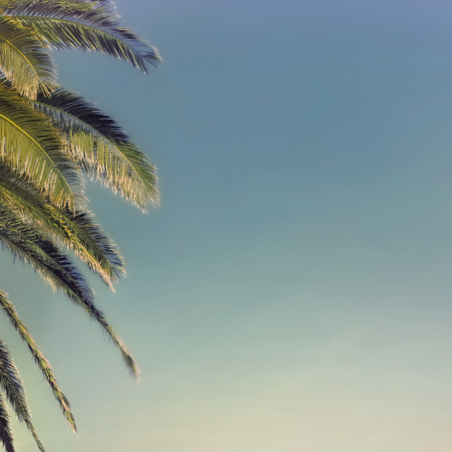 """""""panoramic view on a palm tree in front of a sunny sky"""" stock image"""