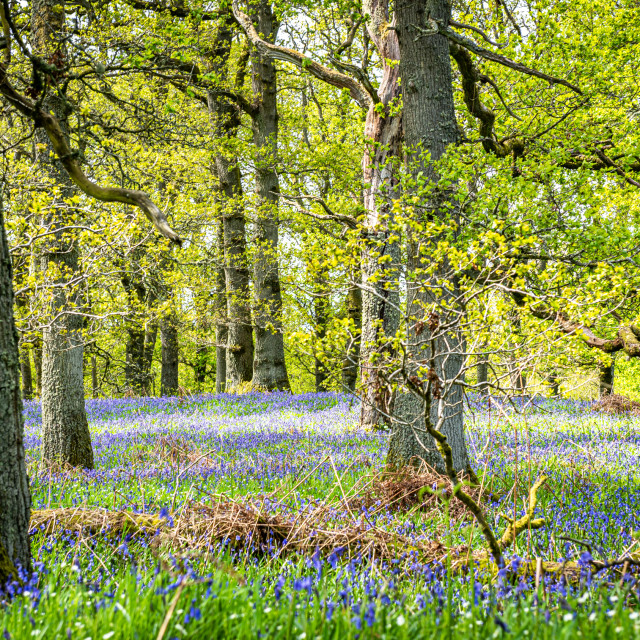 """""""Colourful Forest"""" stock image"""