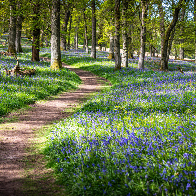 """""""Pathway to tranquillity"""" stock image"""