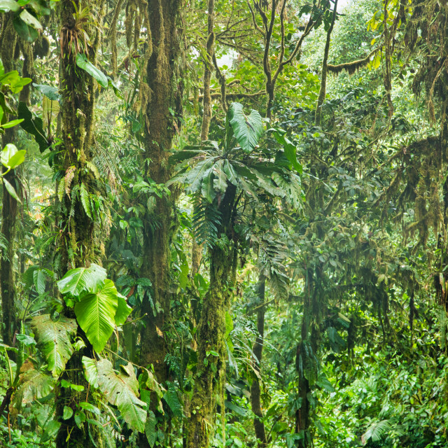"""Lush Green Tropical Jungle Scene"" stock image"