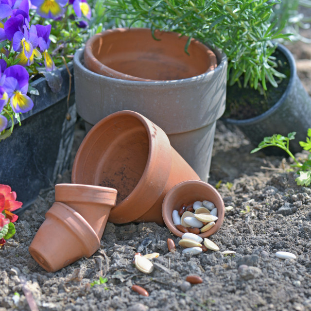 """""""seeds spilled on the soil next to flower pot and flower in a garden"""" stock image"""