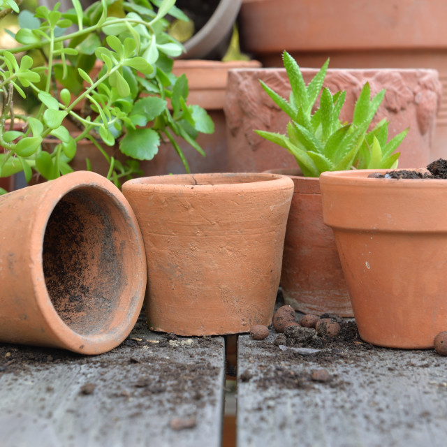 """""""close on terra cotta flower pots with plants and shovel on a table in garden"""" stock image"""