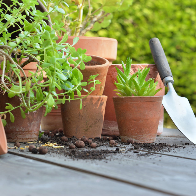 """""""terra cotta flower pots with plants and shovel on a table in garden"""" stock image"""