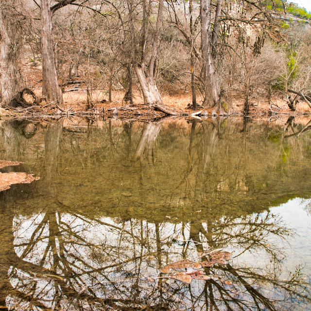 """""""Guadalupe River Reflection"""" stock image"""