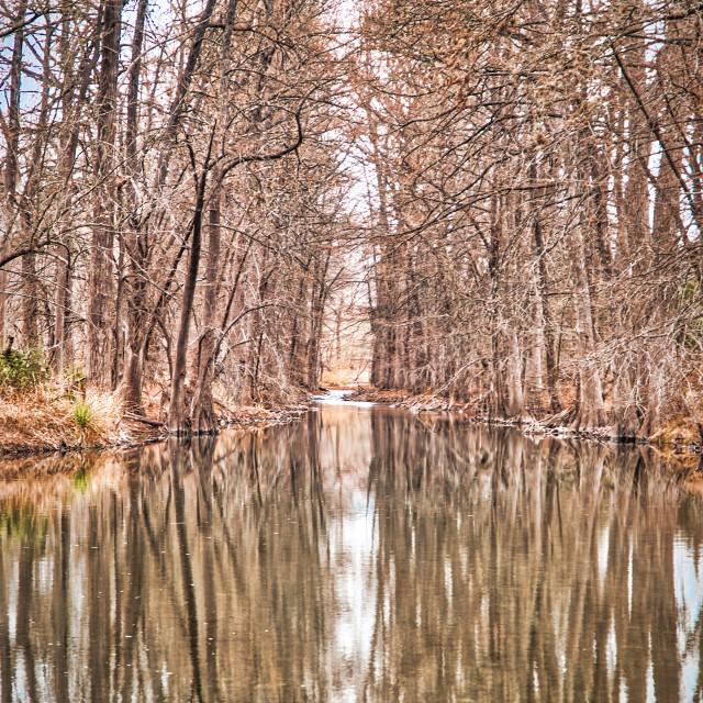 """Barren Trees Reflection"" stock image"