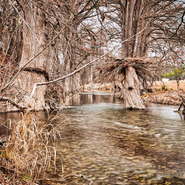 """""""Bare Trees Growing in a River"""" stock image"""