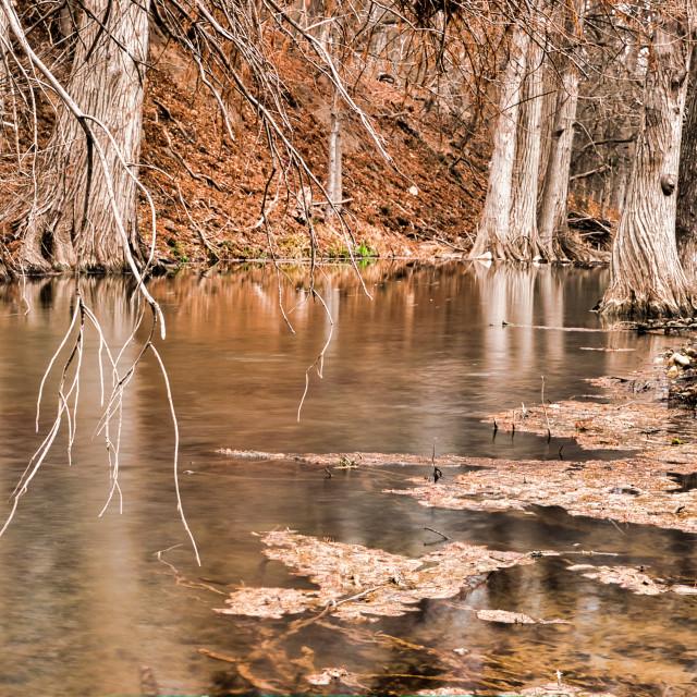 """""""Woodland Reflection"""" stock image"""