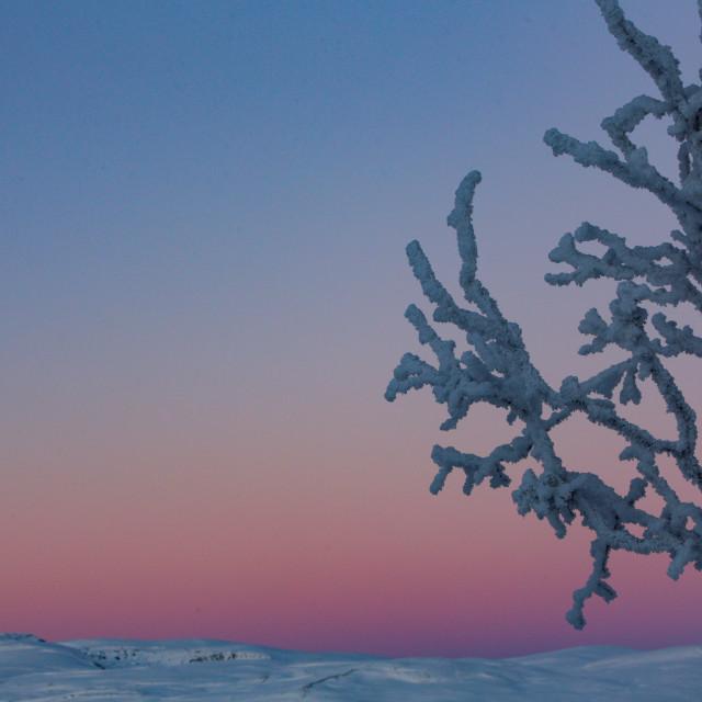 """Arctic Sky"" stock image"