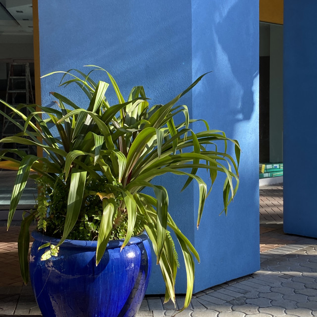 """Large Blue Vase against blue wall in Curaçao"" stock image"