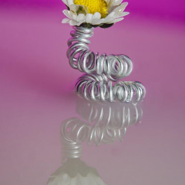 """daisy vase"" stock image"