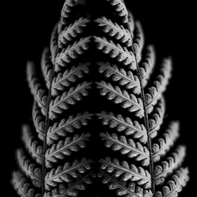 """""""black background fern"""" stock image"""
