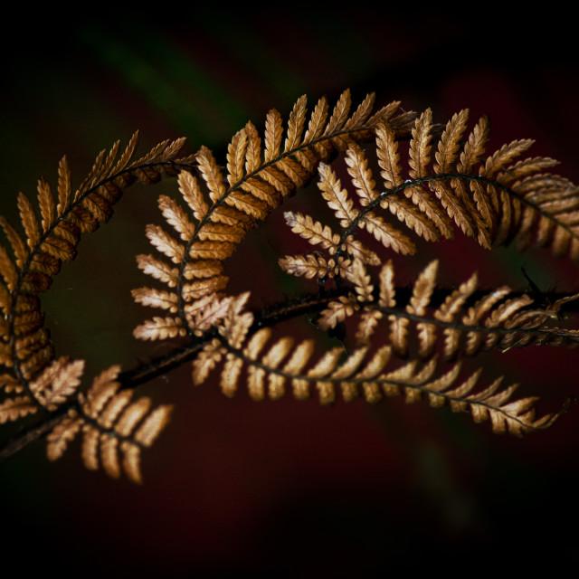 """""""Punga Ferns"""" stock image"""