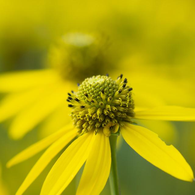 """beautiful flowers"" stock image"