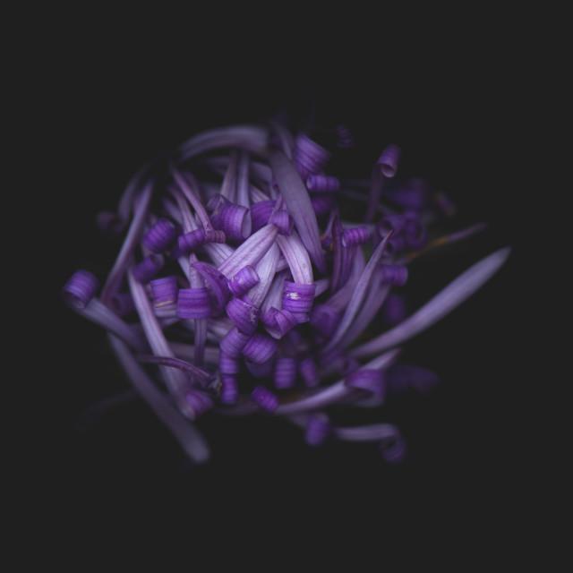 """purple aster flowers"" stock image"