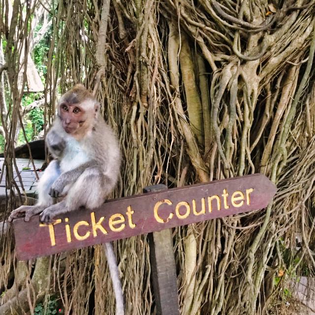 """""""Sacred Monkey Forest Sanctuary"""" stock image"""