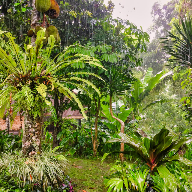 """Bali Tropical Landscape"" stock image"