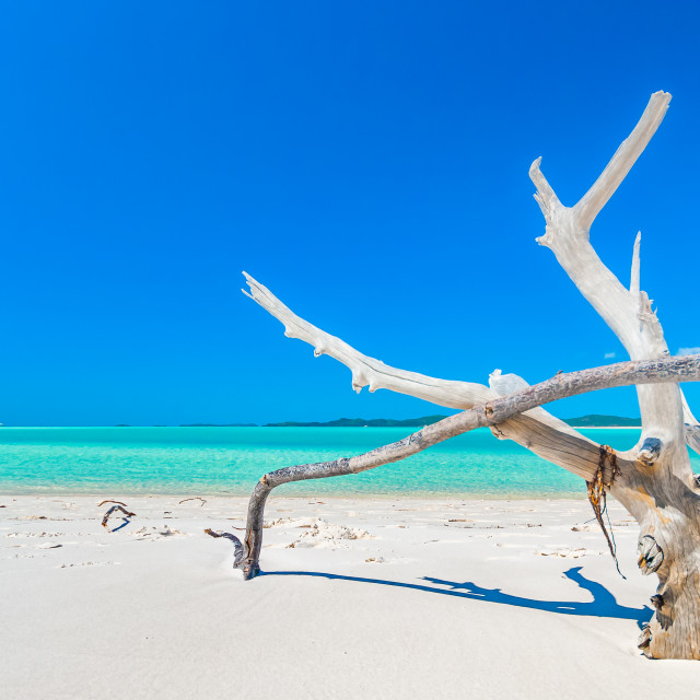 """Bleached wood on white silica sand beach"" stock image"