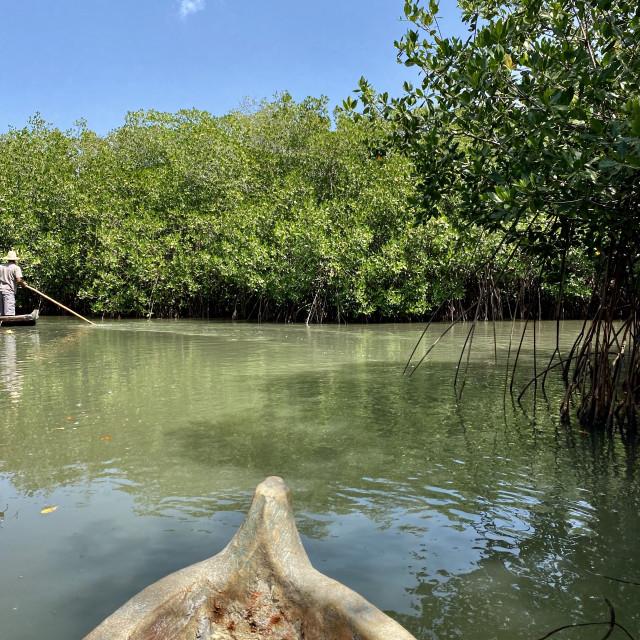 """Mangrove wooden canoe ride"" stock image"