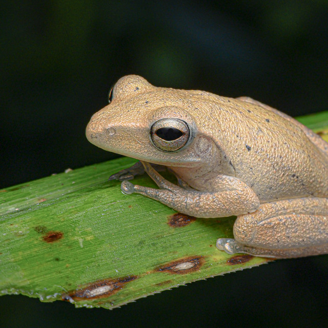 """""""Frog on Leaf"""" stock image"""
