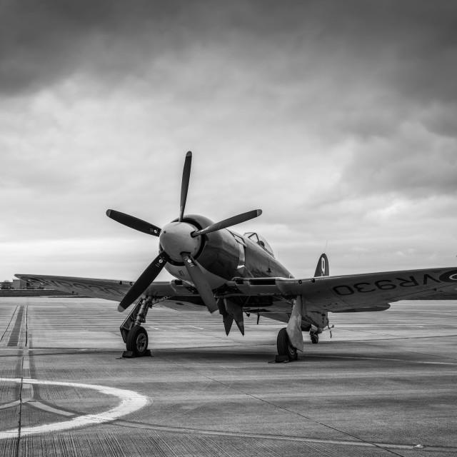 """Hawker Sea Fury"" stock image"