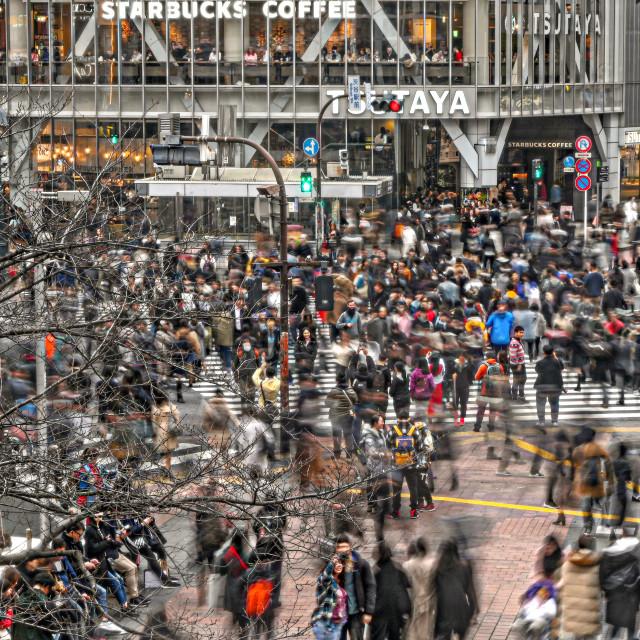 """Shibuya Crossing 01"" stock image"