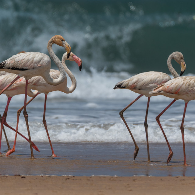 """""""Four Flamingos by the Ocean"""" stock image"""