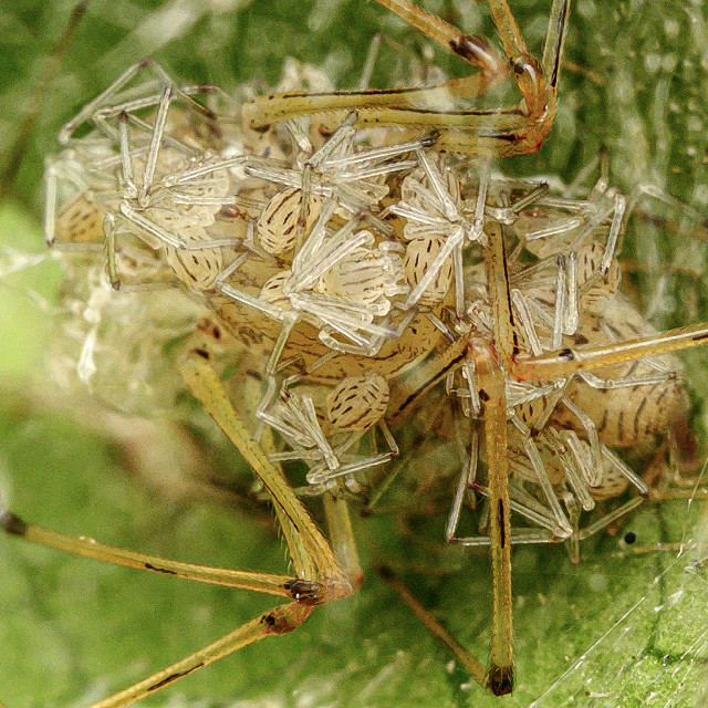 """""""Spiderlings 01"""" stock image"""