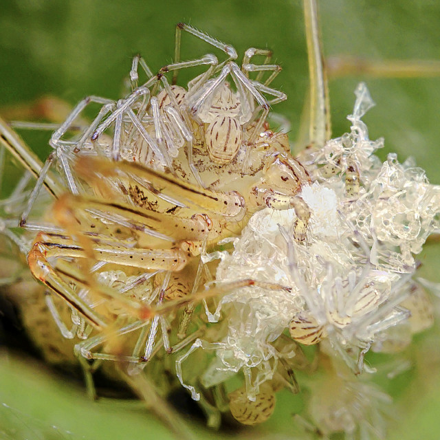 """""""Spiderlings 02"""" stock image"""