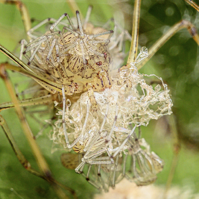 """""""Spiderlings 03"""" stock image"""