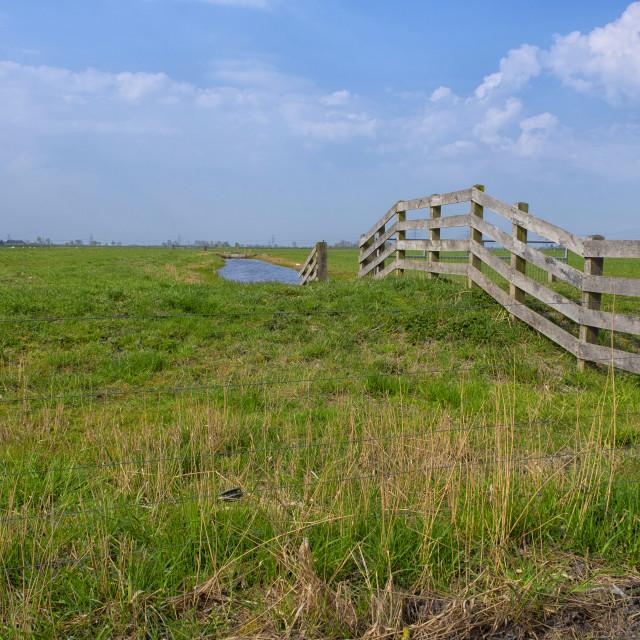 """Fence in green landscape in Groningen, The Netherlands"" stock image"
