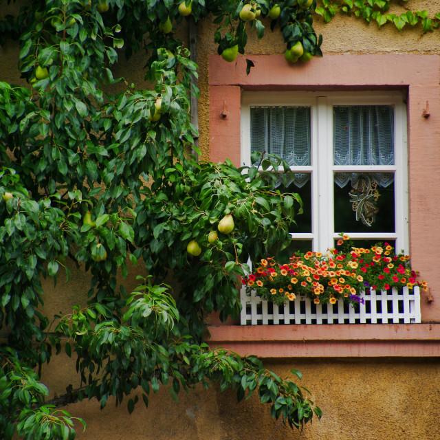 """My home is my garden"" stock image"