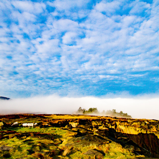 """Ilkley Moor in Early Morning Mist"" stock image"