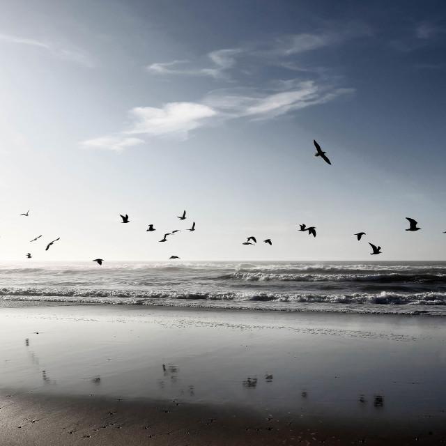 """Surreal flying birds - stock photo"" stock image"