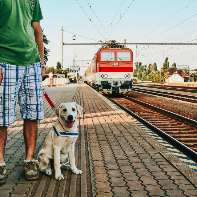 """""""Dog on a leash sitting on the floor of the train station platform with a train approaching in the background"""" stock image"""