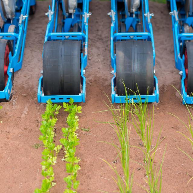 """Farm equipment and plants"" stock image"
