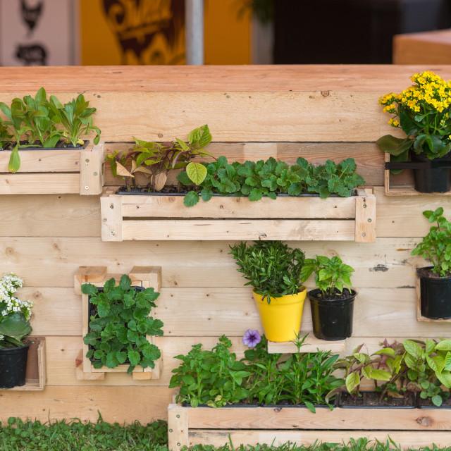 """Plants on display"" stock image"