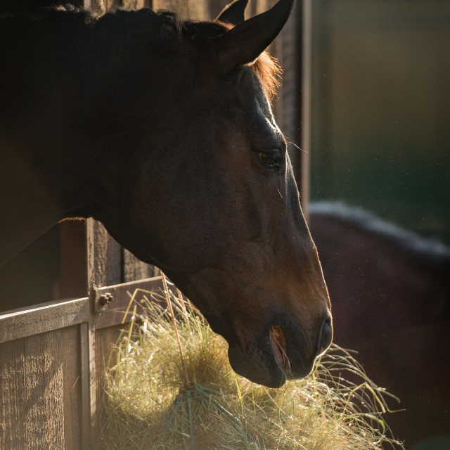 """""""Horse in stable"""" stock image"""