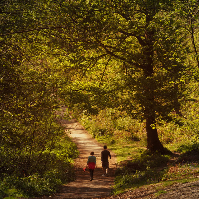 """Woodland Walk"" stock image"