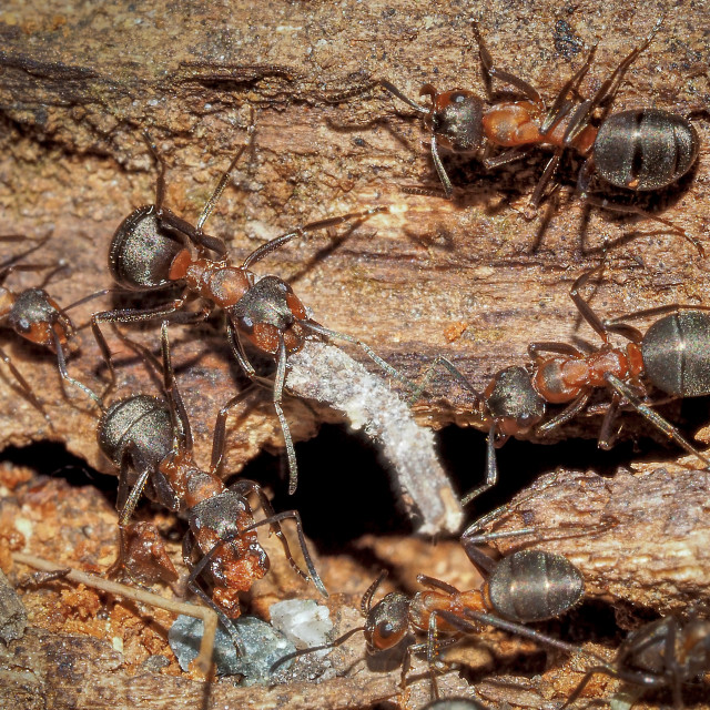 """Busy Ants"" stock image"