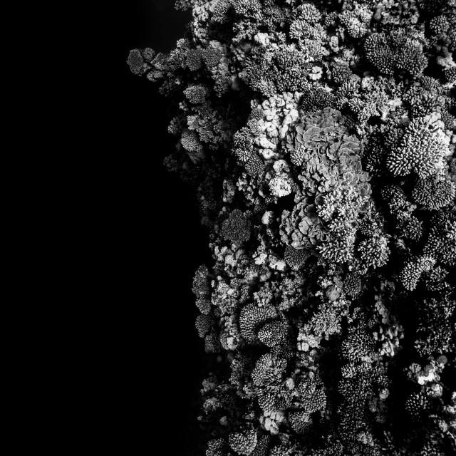 """Black & White coralreef"" stock image"