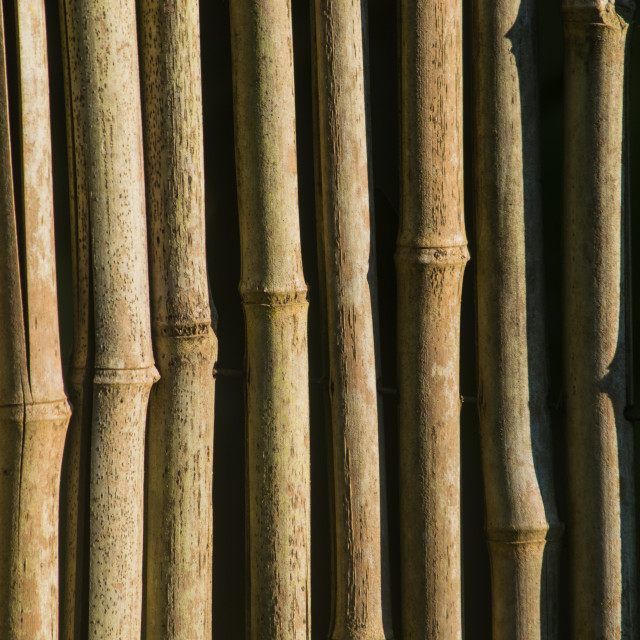 """Bamboo Fence Detail"" stock image"