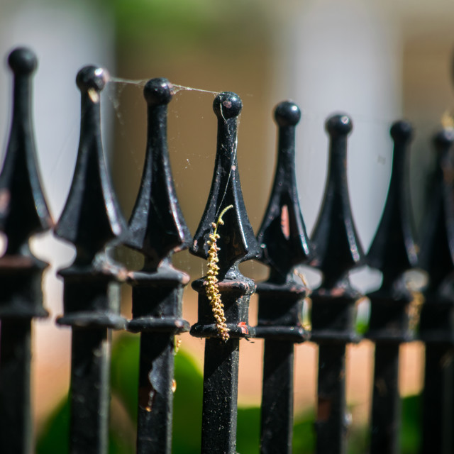 """Iron Fence Detail"" stock image"
